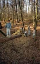 Balancieren_Wald
